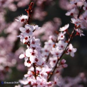 Aromaterapia Aceites Esenciales
